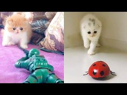Aww - Funny and Cute Animals Compilation 2019 #3 - CuteVN